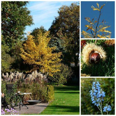 herfst, tuinontwerp vanDoorenTUINEN
